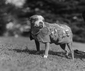 Stubby-Millitary-war-dog