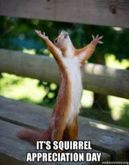 its-squirrel-appreciation-yp17ks